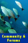 Sea of Cortez Forums and Online Community