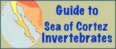 invertebrates of the sea of cortez logo