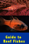 Guide to Reef Fishes of the Sea of Cortez